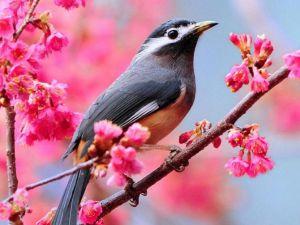 beautiful-spring-bloom-spring-33876232-670-503